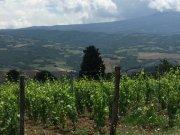 Lotsa vineyards