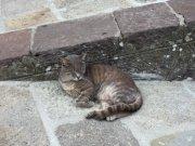 il gatto / le chat