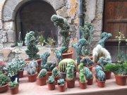 Fantastic cacti